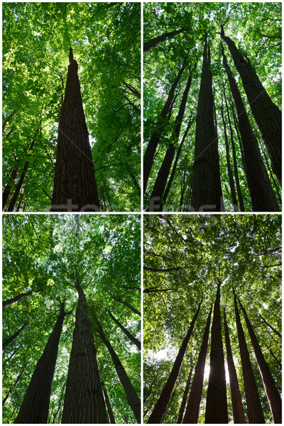 Groene bos mooie foto's boom Stockfoto © sailorr