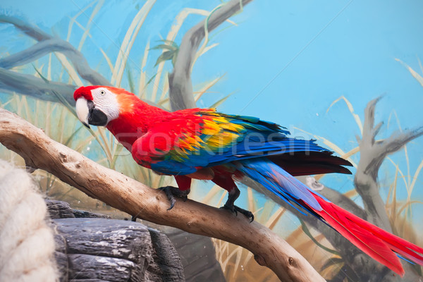 Parrot красивой фото тропические зеленый синий Сток-фото © sailorr
