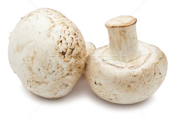 Champignon mantar taze yalıtılmış beyaz gıda Stok fotoğraf © sailorr