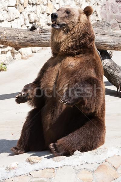 Beer mooie foto groot sterke bruine beer Stockfoto © sailorr