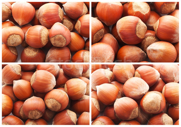 Hazelnuts or filbert nuts Stock photo © sailorr