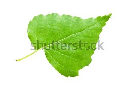 Foglia verde bella macro foto betulla foglia Foto d'archivio © sailorr