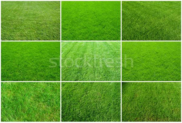 Green grass Stock photo © sailorr