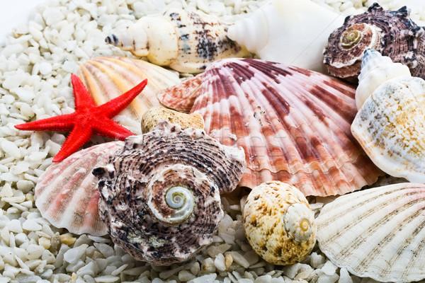 Kagylók trópusi fehér homok absztrakt háttér óceán Stock fotó © sailorr