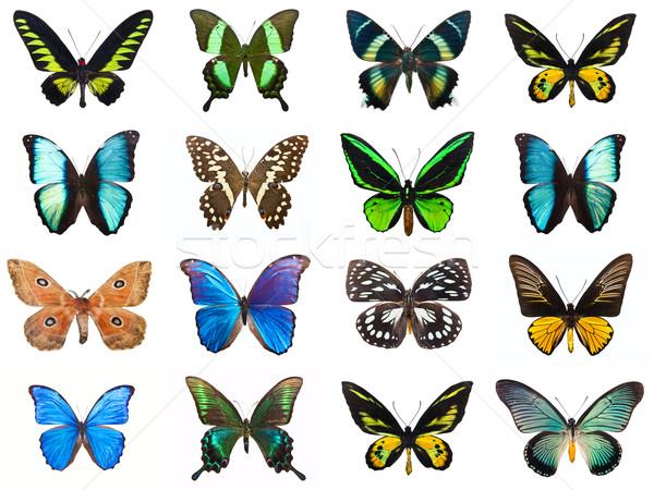 Foto stock: Tropical · borboletas · coleção · belo · isolado · branco