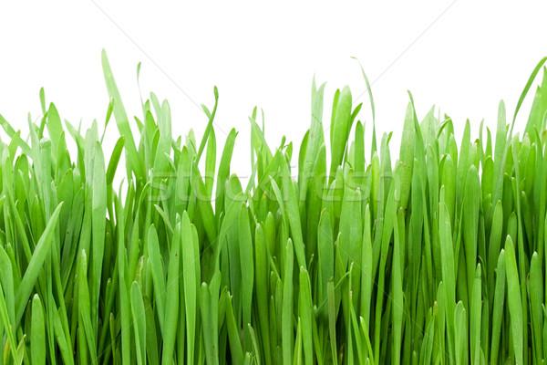 Groen gras twee witte gras tuin boerderij Stockfoto © sailorr