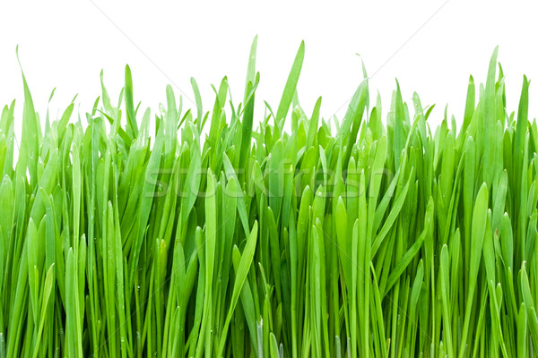 Fresco grama verde gotas de água grama natureza jardim Foto stock © sailorr