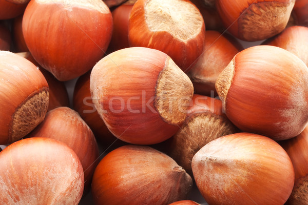 Hazelnuts or filbert Stock photo © sailorr