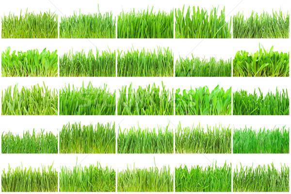 зеленая трава свежие изолированный белый текстуры весны Сток-фото © sailorr