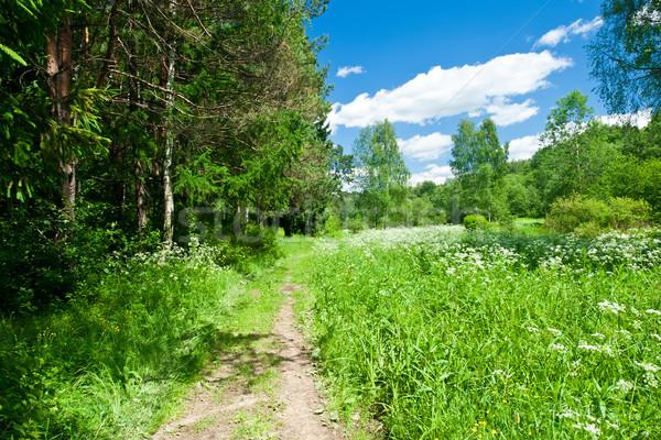 Yaz manzara yeşil orman çayır mavi gökyüzü Stok fotoğraf © sailorr