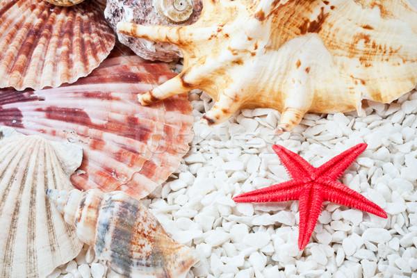 Conchiglie tropicali spiaggia di sabbia texture mare sfondo Foto d'archivio © sailorr