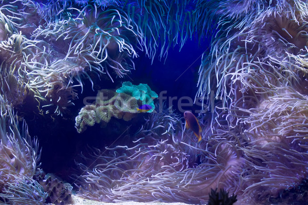 Sea Stock photo © sailorr