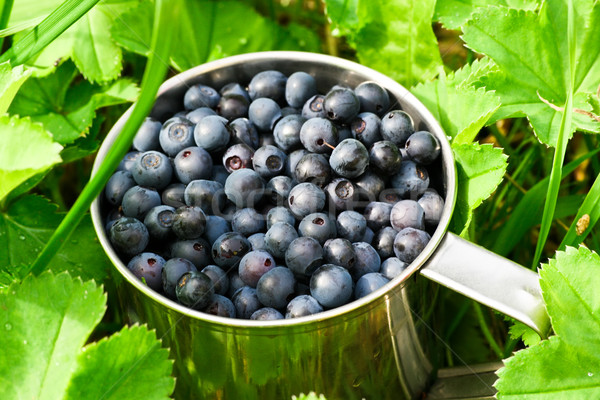 Bilberries Stock photo © sailorr