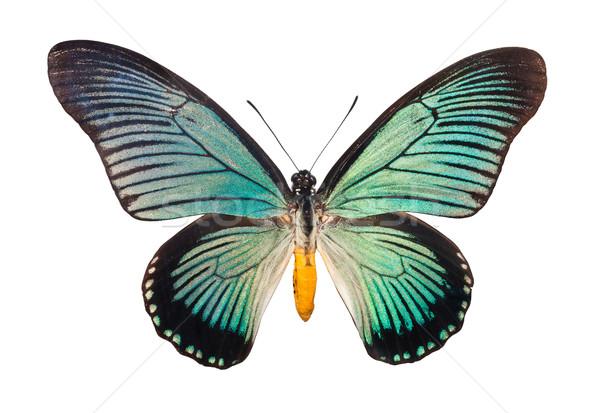 Butterfly Papilio Zalmoxis Stock photo © sailorr