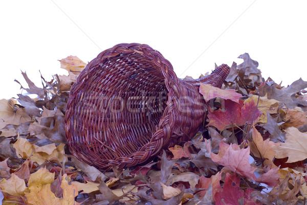 Cuerno de la abundancia hojas colorido caída Foto stock © saje