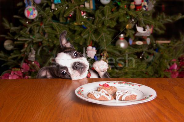 Poopsie Christmas Reaching for Cookies Stock photo © saje
