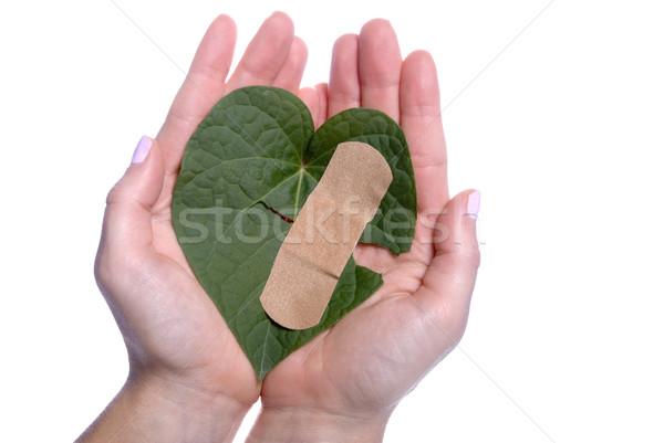 Herz Blatt defekt Mädchen Hände Stock foto © saje