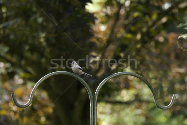 Pol wenig Vogel Sitzung Garten Natur Stock foto © saje