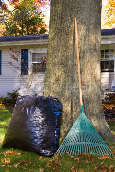 Raking Leaves Bag and Rake by Tree Stock photo © saje
