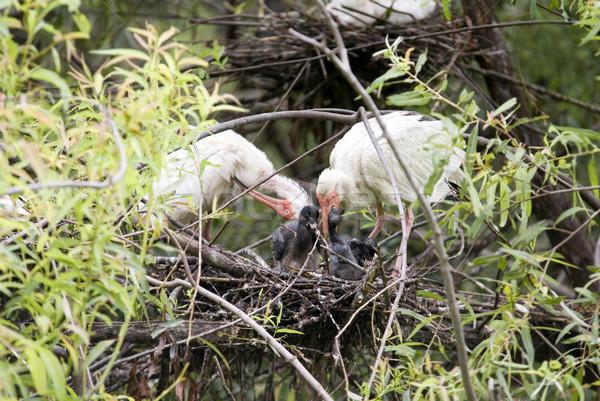 Kuş civciv bebek bahar turuncu Stok fotoğraf © saje