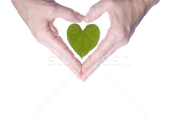 Kalp yaprak eller kalp şekli sevmek Stok fotoğraf © saje
