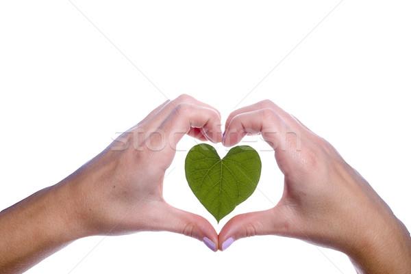 Kalp yaprak kızlar eller sevmek Stok fotoğraf © saje