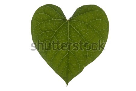 Heart Leaf Full Frame Landscape Stock photo © saje