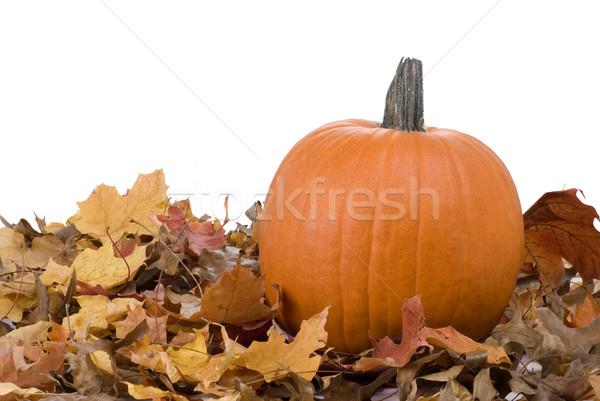 Halloween Pumpkin and Leaves Stock photo © saje