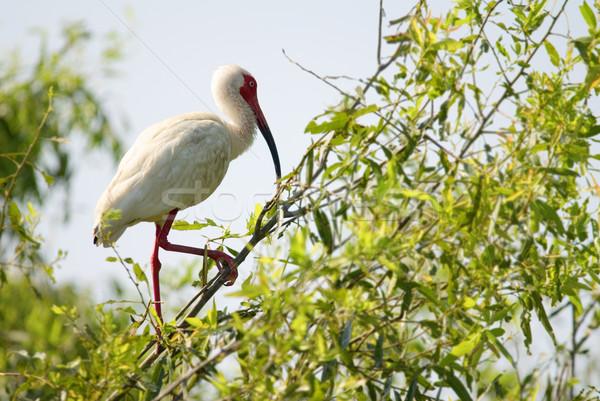 Vogel Baum weiß stehen Auge Natur Stock foto © saje