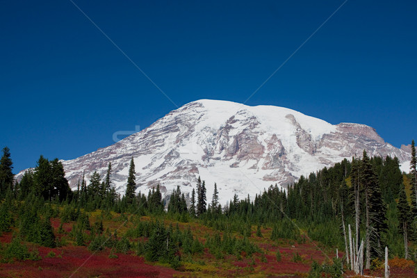 Mount Rainier Over Autumn Valley Stock photo © saje