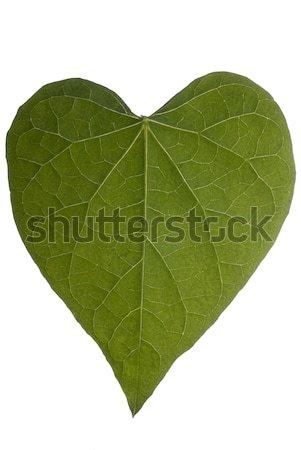 Serca liści full frame biały miłości Zdjęcia stock © saje