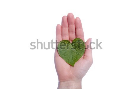 Heart Shaped Leaf in Girls Hand Stock photo © saje