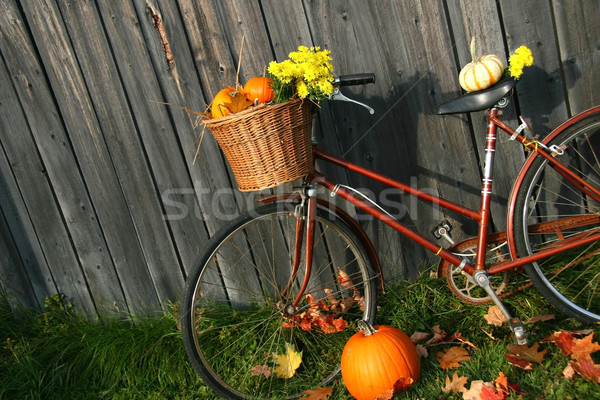 Old bicycle with pumpkins  Stock photo © Sandralise