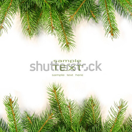 Stock photo: Pine branches isolated on white