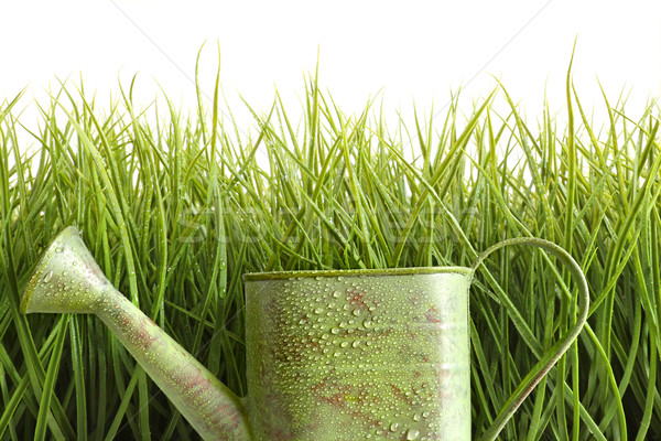 Small watering can with tall grass against white Stock photo © Sandralise