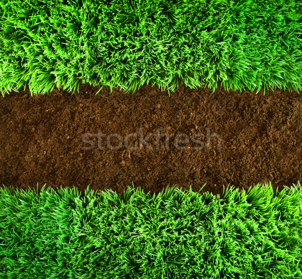 Stock photo: Green grass and earth Background