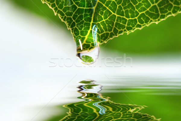 Leaf droplet over water Stock photo © Sandralise