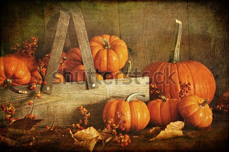 Still life harvest  decoration for Thanksgiving  Stock photo © Sandralise