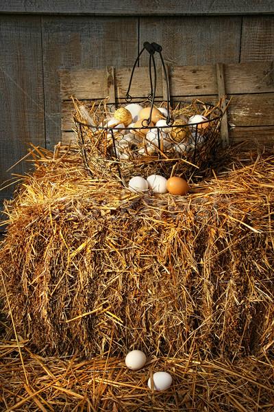 Basket of freshly laid  eggs lying on straw Stock photo © Sandralise