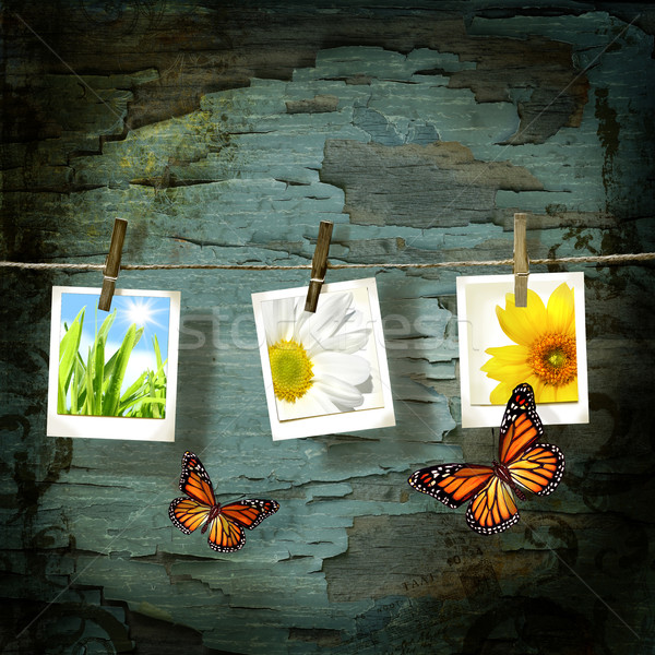 Instant camera  pictures  against old crackled backdrop with butterflies Stock photo © Sandralise