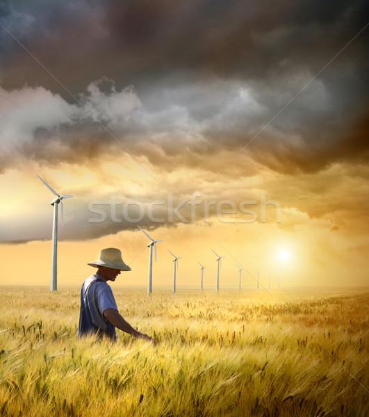 Farmer checking his crop of wheat  Stock photo © Sandralise