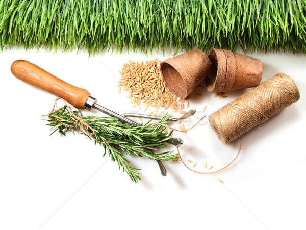 Grass, seeds, cord and peat pots for spring  Stock photo © Sandralise