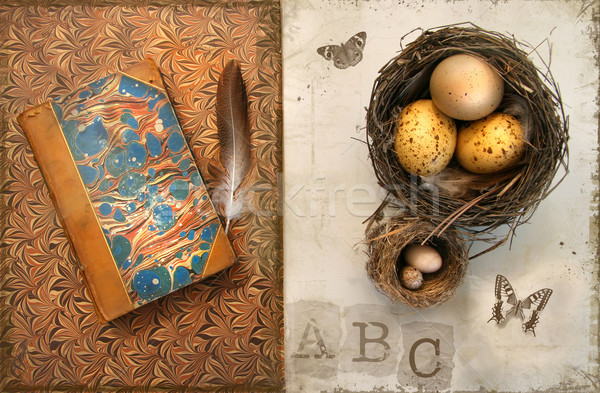 Old books with bird nests on grunge Stock photo © Sandralise