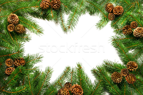 Branches with pine cones against white Stock photo © Sandralise