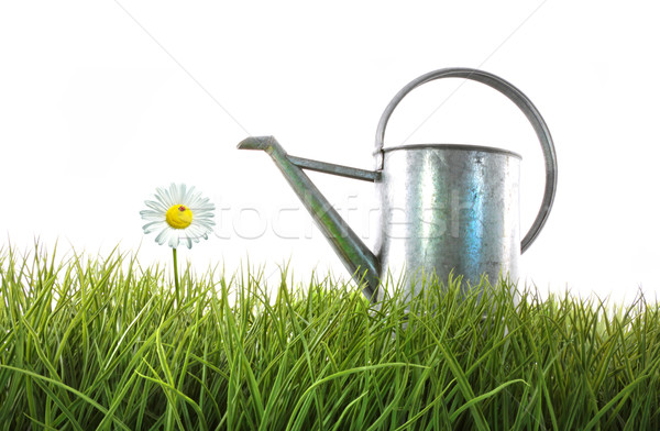 Old watering can in grass with white Stock photo © Sandralise