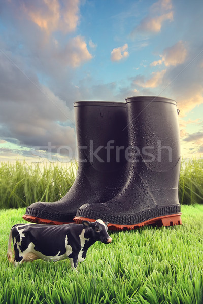 Rubber boots in grass with toy cow  Stock photo © Sandralise