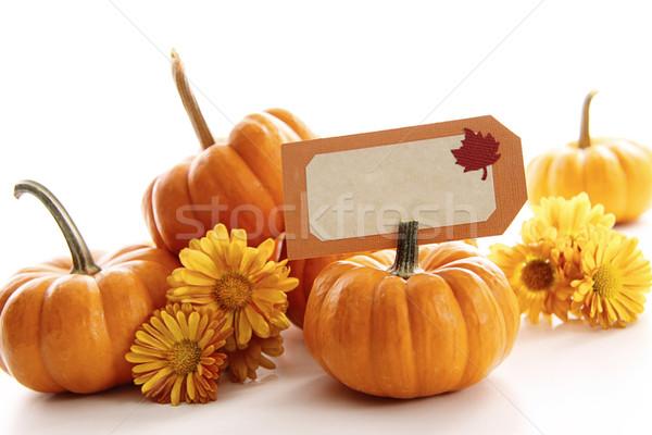 Primer plano mini calabazas lugar tarjeta blanco Foto stock © Sandralise