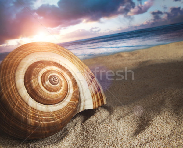 Stock photo: Large seashell in the sand