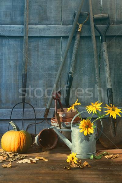 Stock fotó: Sütőtök · virágok · szerszámok · kert · munka · fény