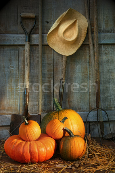 Garden tools in shed with pumpkins Stock photo © Sandralise